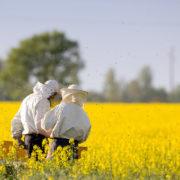 Apiarists in rapeseed field
